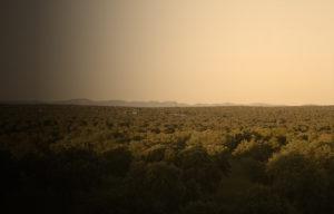 Dehesa del Valle de los Pedroches